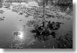 asia, black and white, cambodia, horizontal, landscapes, reflections, scenics, trees, water, photograph