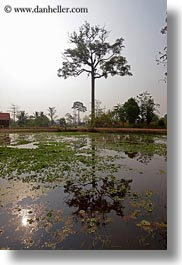 asia, cambodia, landscapes, reflections, scenics, trees, vertical, water, photograph