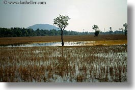 asia, cambodia, horizontal, landscapes, reflections, scenics, trees, water, photograph