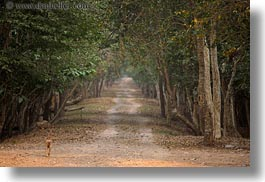 asia, cambodia, dogs, horizontal, lined, roads, scenics, trees, photograph