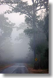 asia, cambodia, foggy, roads, scenics, trees, vertical, photograph