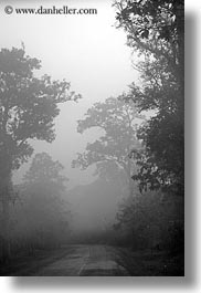 asia, black and white, cambodia, foggy, roads, scenics, trees, vertical, photograph