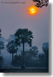 asia, cambodia, hazy, scenics, sunrise, sunsets, trees, vertical, photograph