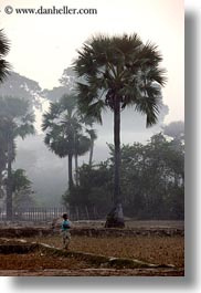 asia, cambodia, childrens, hazy, palm trees, scenics, trees, vertical, photograph