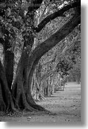 asia, black and white, cambodia, lines, scenics, trees, vertical, photograph