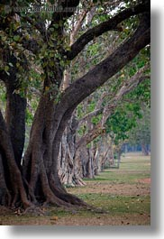 asia, cambodia, lines, scenics, trees, vertical, photograph