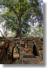 architectural ruins, asia, cambodia, growing, over, scenics, trees, vertical, photograph