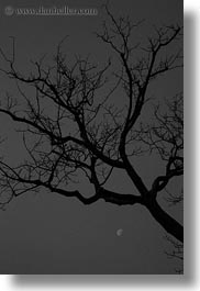 asia, black and white, cambodia, moon, scenics, trees, vertical, photograph