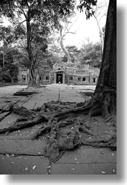asia, black and white, cambodia, entry, gates, roots, ta promh, vertical, photograph