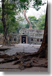 asia, cambodia, entry, gates, roots, ta promh, vertical, photograph