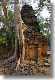 architectural ruins, asia, cambodia, fin, roots, ta promh, vertical, photograph