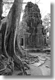 architectural ruins, asia, black and white, cambodia, fin, roots, ta promh, vertical, photograph
