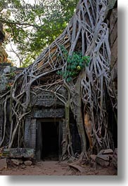 asia, cambodia, doorways, draping, roots, ta promh, trees, vertical, photograph