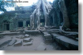 asia, cambodia, draping, horizontal, roots, ta promh, trees, walls, photograph