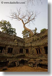 asia, cambodia, ta promh, temples, tops, trees, vertical, photograph
