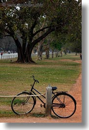 asia, bicycles, cambodia, transportation, trees, vertical, photograph