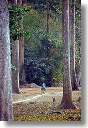 among, asia, bicycles, cambodia, girls, transportation, trees, vertical, photograph
