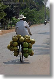asia, bicycles, cambodia, carrying, coconuts, men, transportation, vertical, photograph