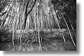 asia, bamboo, black and white, gardens, horizontal, japan, koto in, kyoto, tall, photograph