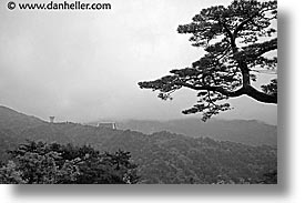 asia, black and white, horizontal, japan, japanese, kyoto, miho museum, pines, red, trees, photograph