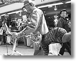 asia, bicycles, black and white, cats, horizontal, japan, men, people, photograph