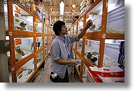 asia, horizontal, japan, men, people, petshop, workers, photograph