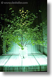 asia, japan, kanto, tokyo, trees, underlit, vertical, photograph