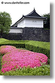 asia, flowers, japan, kanto, pink, royal palace gardens, tokyo, vertical, photograph