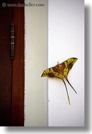 animals, asia, big, butterflies, laos, luang prabang, vertical, photograph