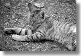 animals, asia, black and white, cats, grey, horizontal, laos, luang prabang, sleeping, photograph