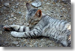 animals, asia, cats, grey, horizontal, laos, luang prabang, sleeping, photograph