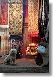 animals, asia, dogs, laos, luang prabang, rugs, vertical, white, photograph