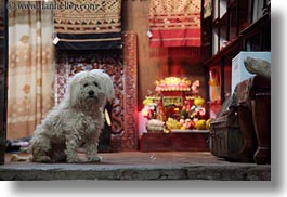 animals, asia, dogs, horizontal, laos, luang prabang, rugs, white, photograph