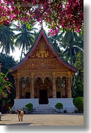 asia, bougainvilleas, buddhist, buildings, flowers, laos, luang prabang, nature, paphaimisaiyaram, religious, temples, vertical, wat, photograph