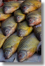 asia, fish, laos, luang prabang, vertical, photograph
