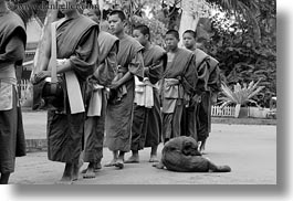 asia, asian, black and white, colors, dogs, horizontal, laos, luang prabang, men, monks, oranges, people, procession, walking, photograph