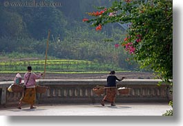 asia, bougainvilleas, carrying, don ganh, flowers, horizontal, laos, luang prabang, nature, people, womens, photograph