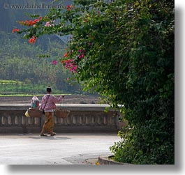 asia, bougainvilleas, carrying, don ganh, flowers, laos, luang prabang, nature, people, square format, womens, photograph