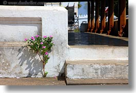 asia, flowers, horizontal, laos, luang prabang, pink, plants, walls, white, photograph
