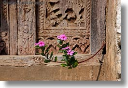 asia, doors, flowers, horizontal, laos, luang prabang, pink, plants, woods, photograph
