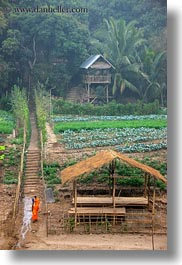 asia, huts, jungle, laos, luang prabang, monks, paths, roofs, scenics, thatched, vertical, photograph