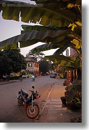 asia, bikes, dusk, laos, luang prabang, motorcycles, palm trees, transportation, under, vertical, photograph