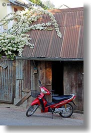asia, bikes, flowers, laos, luang prabang, motorcycles, red, transportation, vertical, white, photograph