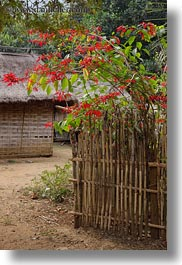 asia, bamboo, bougainvilleas, fences, hmong, laos, red, vertical, villages, photograph