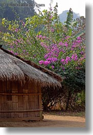 asia, bougainvilleas, hmong, huts, laos, pink, thatched, vertical, villages, photograph