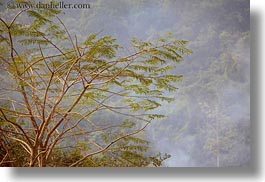 asia, branches, horizontal, laos, rural, trees, villages, photograph