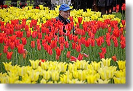 asia, baseball cap, boys, childrens, clothes, colors, flowers, hats, horizontal, moscow, nature, people, red, russia, tulips, yellow, photograph