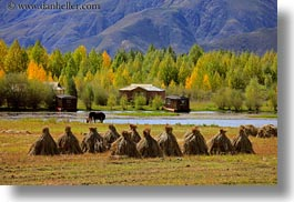 asia, barley, foliage, horizontal, lakes, landscapes, lhasa, mountains, nature, stacks, tibet, trees, water, photograph