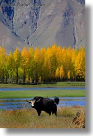asia, barley, foliage, lakes, landscapes, lhasa, nature, stacks, tibet, trees, vertical, water, yaks, photograph