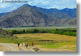 asia, cows, farmers, horizontal, landscapes, lhasa, mountains, tibet, photograph